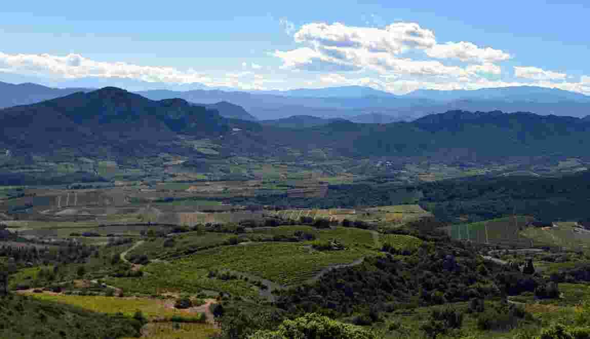 Les Vins doux naturels, spécialité du Roussillon, péril en la demeure ?