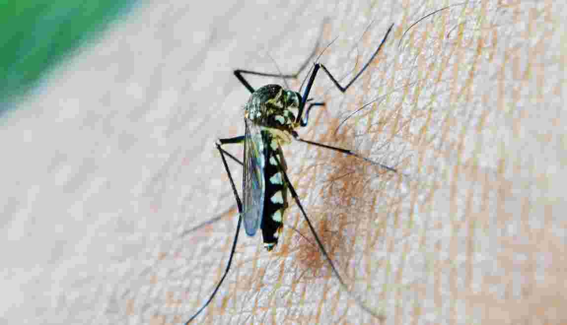 Paludisme : quelles sont les zones à risque ?