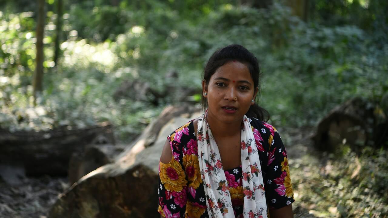 Au Népal, des caméras cachées pour compter les tigres sauvages