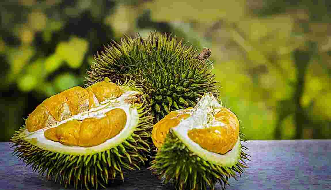 Tout savoir sur le durian, fruit défendu des Asiatiques