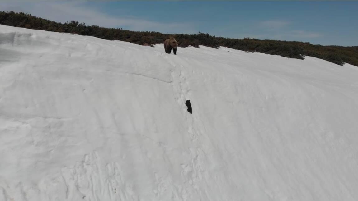 La vidéo d'un petit ourson crée le scandale sur les réseaux sociaux