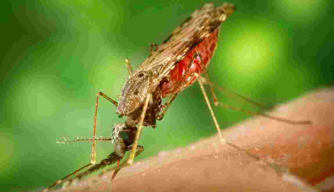 Médicament antipaludéen : ce qu'il faut savoir