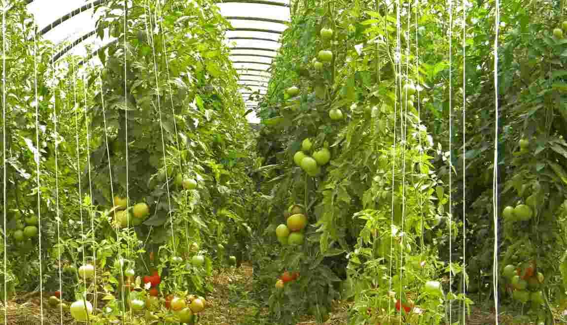 Amap : quels sont les avantages pour les agriculteurs et les consommateurs ?