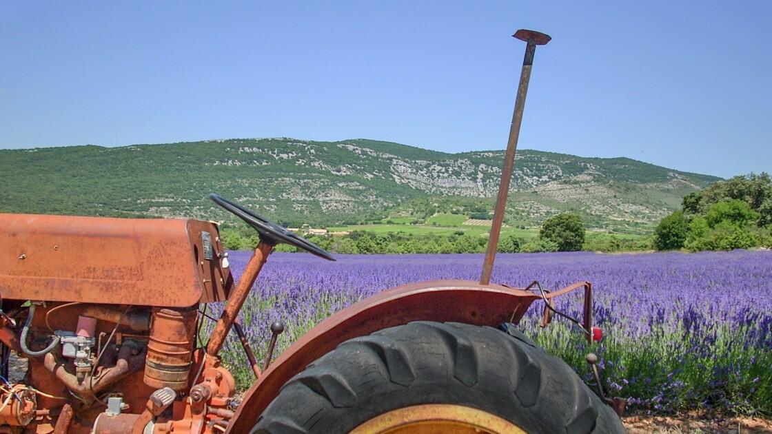10 bonnes raisons pour d'opter pour des vacances à la ferme