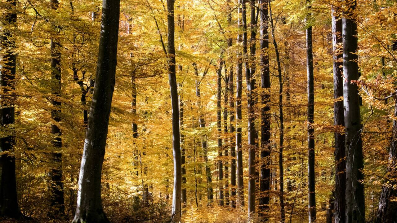 ONF : quelles sont les missions de l'Office national des forêts ?