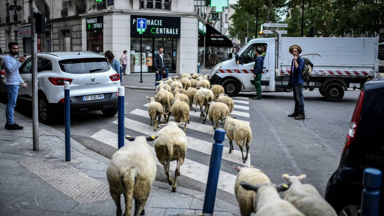 Exposition à Paris: la ville aussi peut devenir agricole