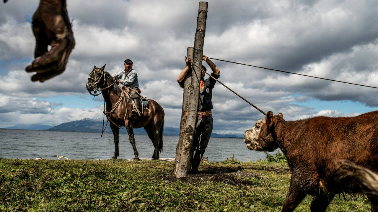 Patagonie : on a partagé le quotidien des cavaliers gauchos en Terre de Feu chilienne