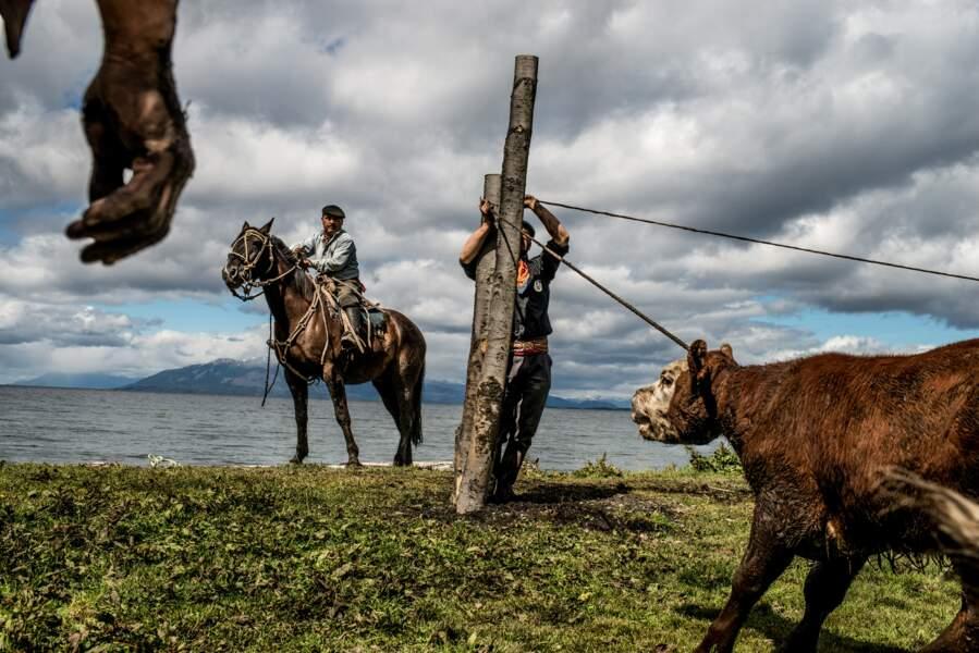 Marquage du bétail