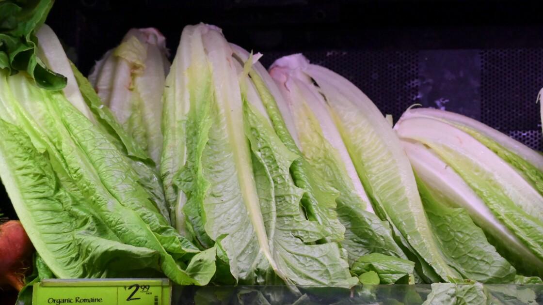 Infectée par une bactérie, la salade romaine bannie des assiettes américaines