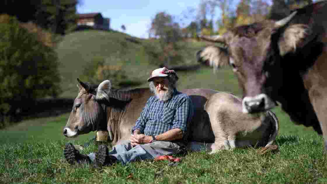 """La Suisse dit non au soutien des """"vaches à cornes"""""""