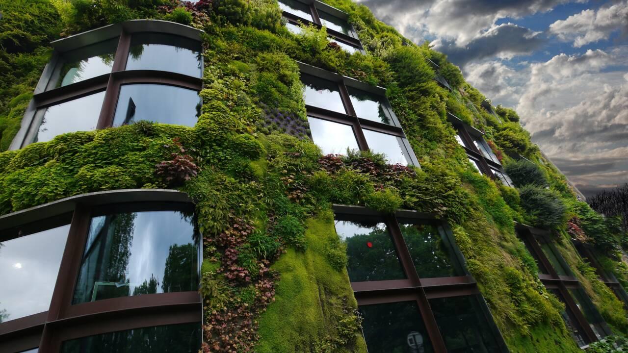 5 bonnes raisons de s'offrir un mur végétal