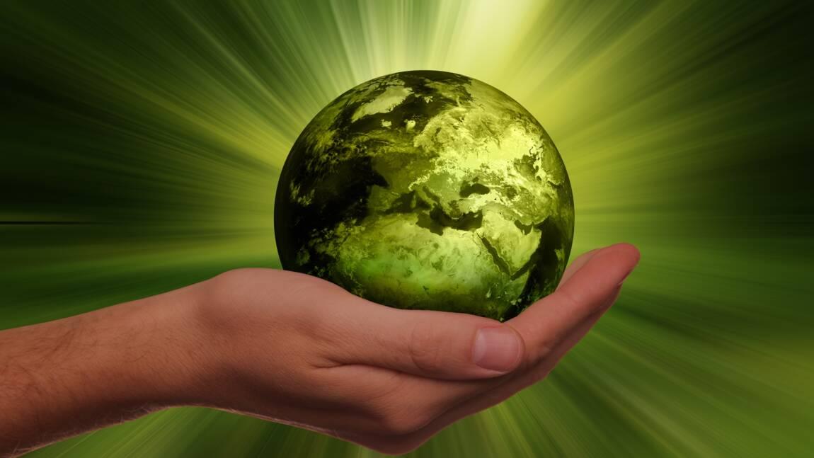 Ecologie : ce qu'il faut savoir sur cette discipline scientifique