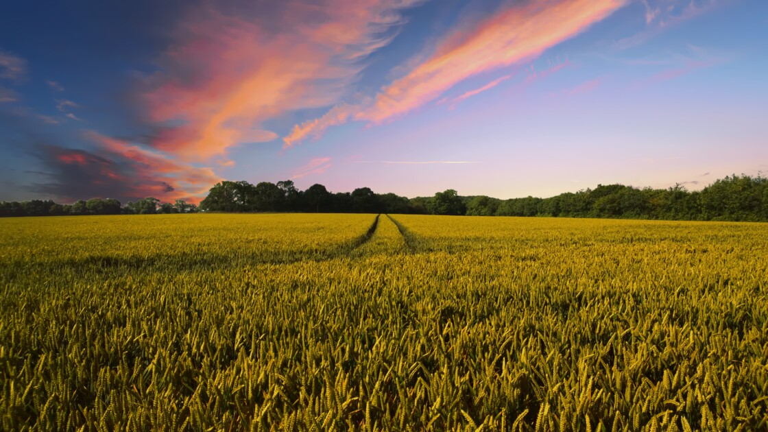 EGA : à quoi servent les Etats Généraux de l'Agriculture ?