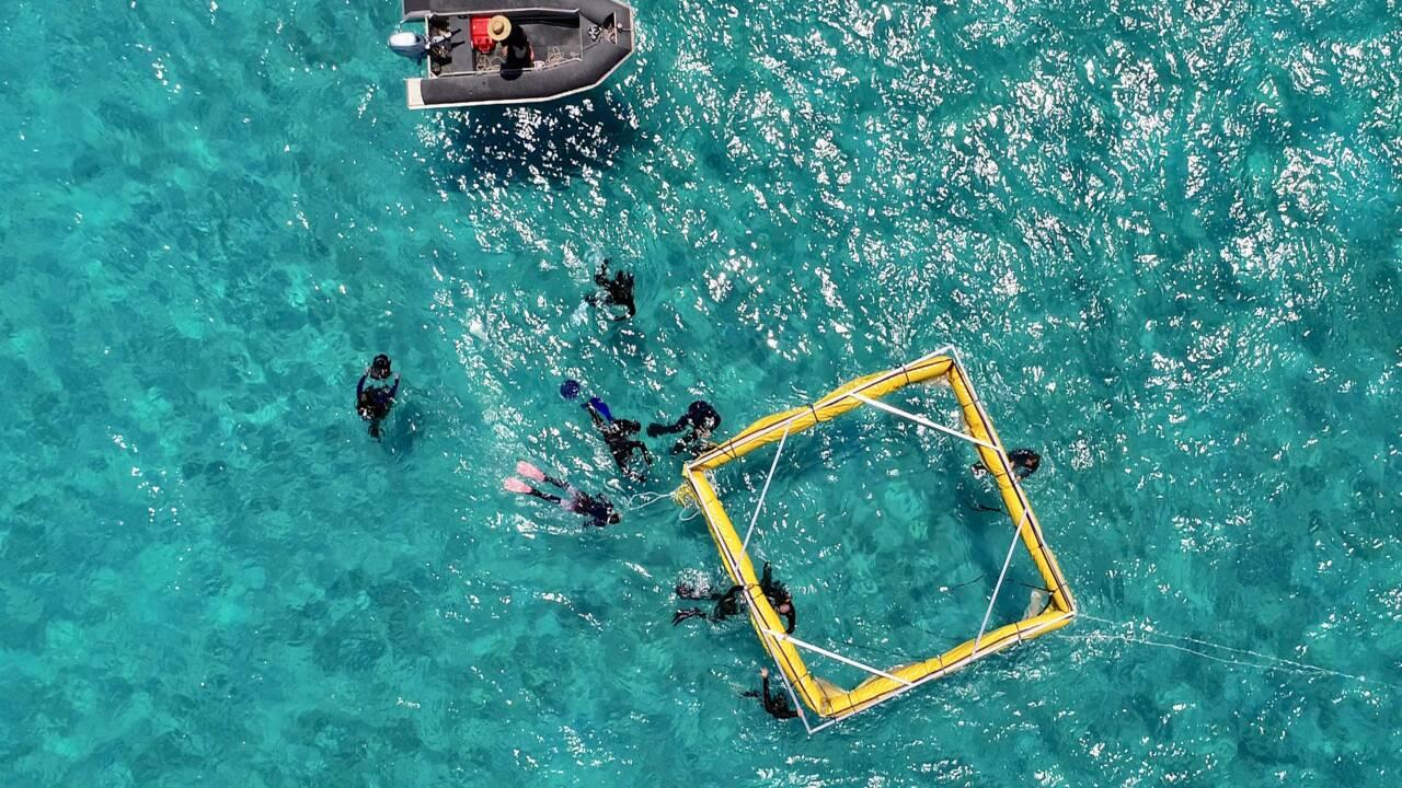 Pour sauver la Grande Barrière, un ambitieux programme d'élevage de larves de coraux