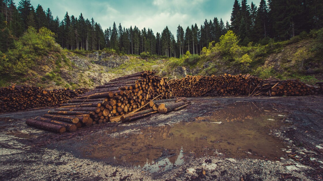 Déforestation : définition, causes et enjeux