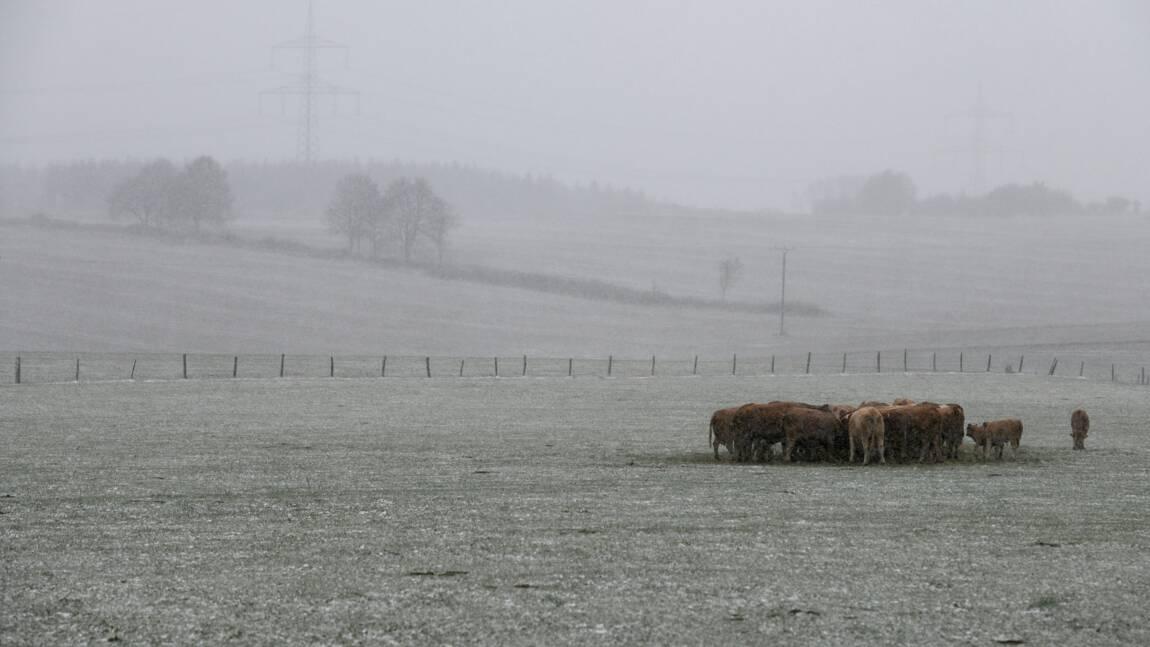 Cop24: Réduire le gaspillage et consommer moins de viande pour nourrir la terre en 2050 selon une étude