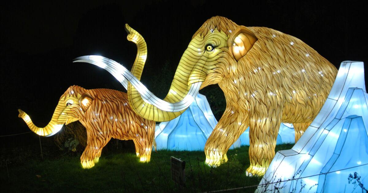 Un Magnifique Festival Lumineux A Decouvrir Pour La Fin D Annee Au