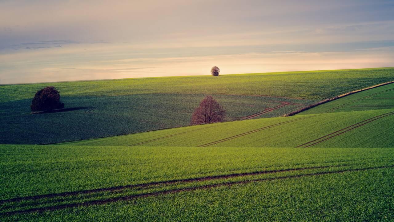 SAU : qu'est-ce que la surface agricole utile ?