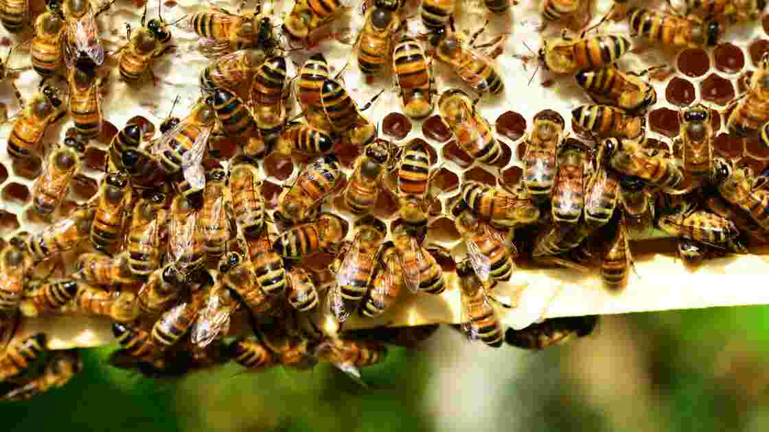 Insecticides : définition et alternatives naturelles