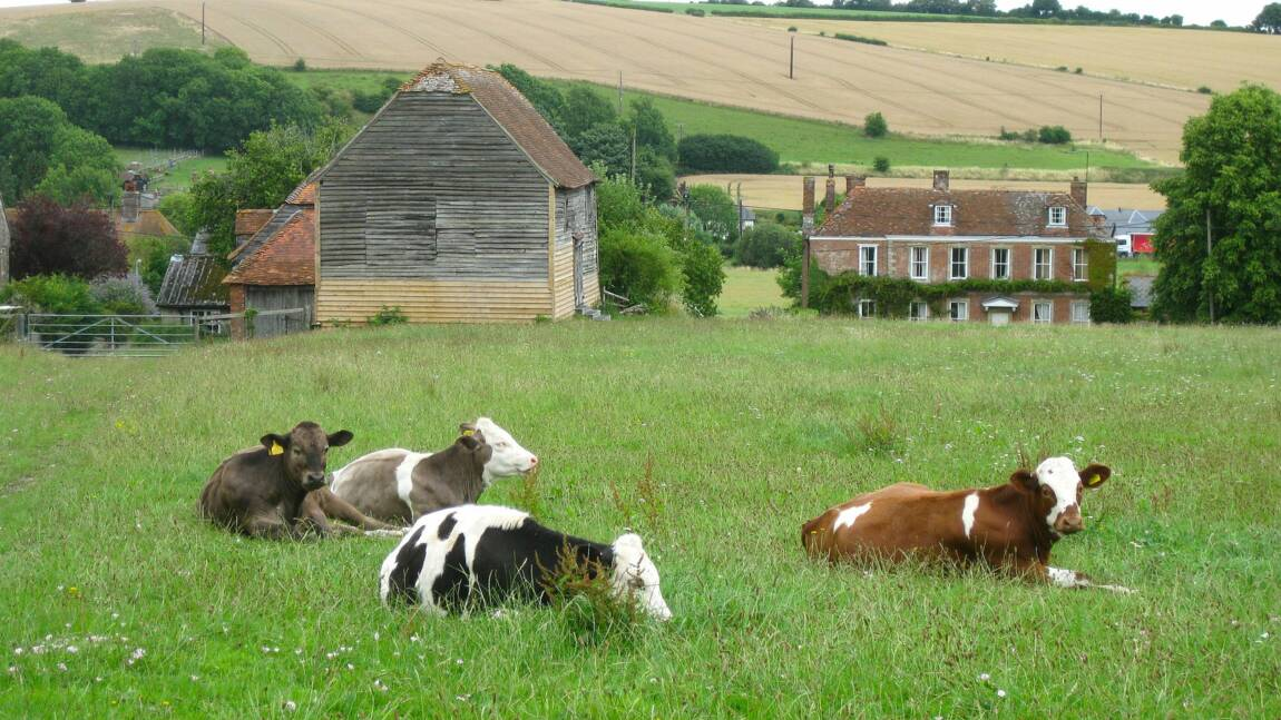 Comment faire du woofing en Angleterre ?