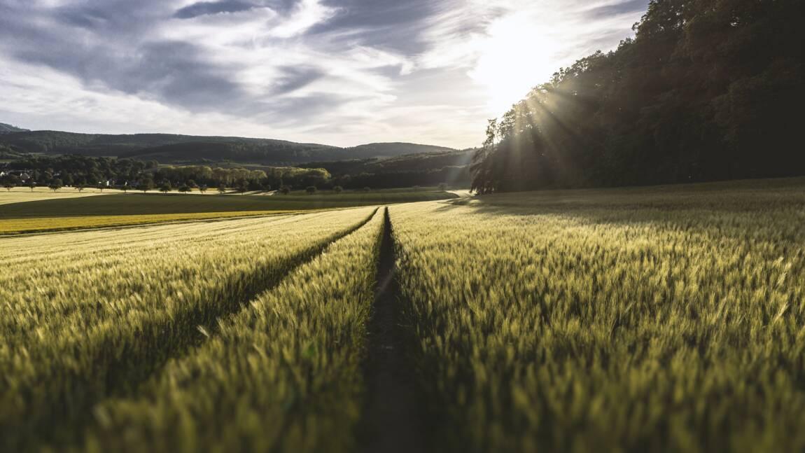 Quelle est la définition de l'agroécologie ?
