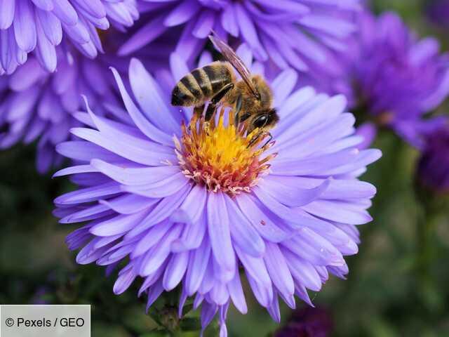 Le premier vaccin pour insectes pourrait aider à sauver les abeilles