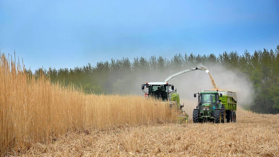 Agriculture durable : définition, principes et enjeux