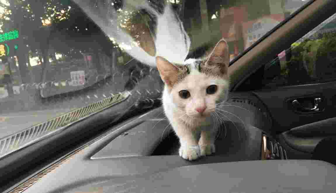 Voyager avec un chat : ce qu'il faut savoir