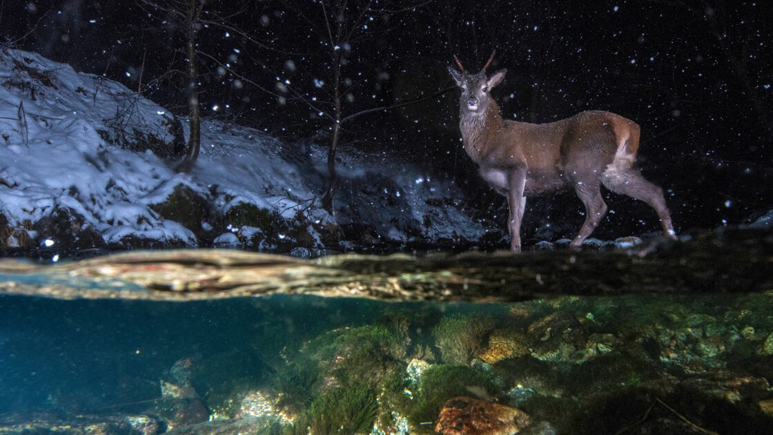 Animaux sauvages : dans les coulisses du Wildlife Photographer of the Year 2018