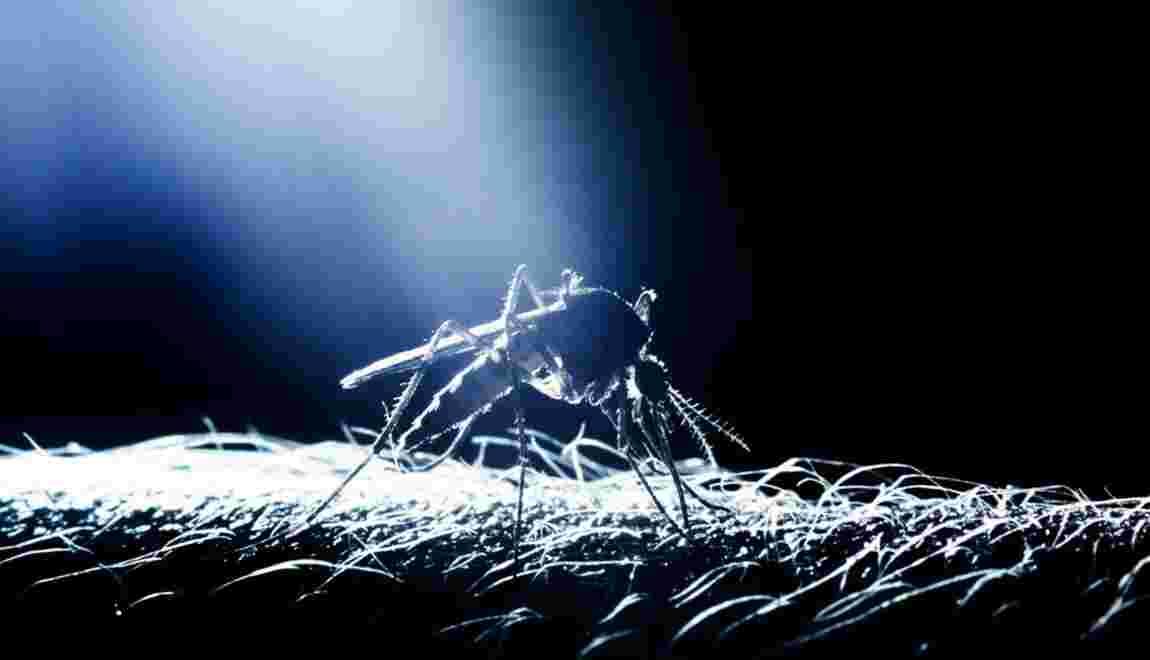 Paludisme : les symptômes qui doivent alerter