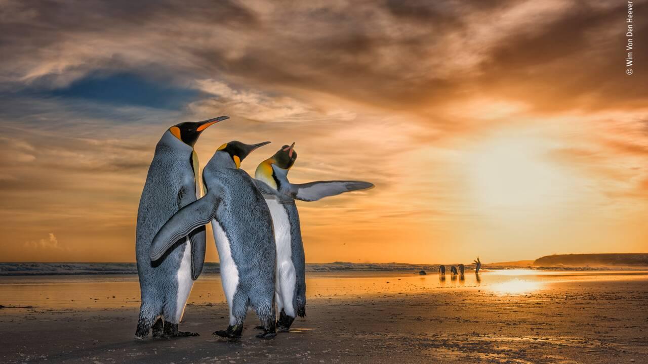 Votez pour les plus belles photos finalistes du concours Wildlife Photographer of the Year