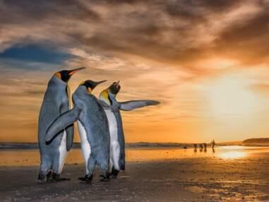 Les plus belles photos finalistes du Wildlife Photographer of the Year ouvertes au vote du public