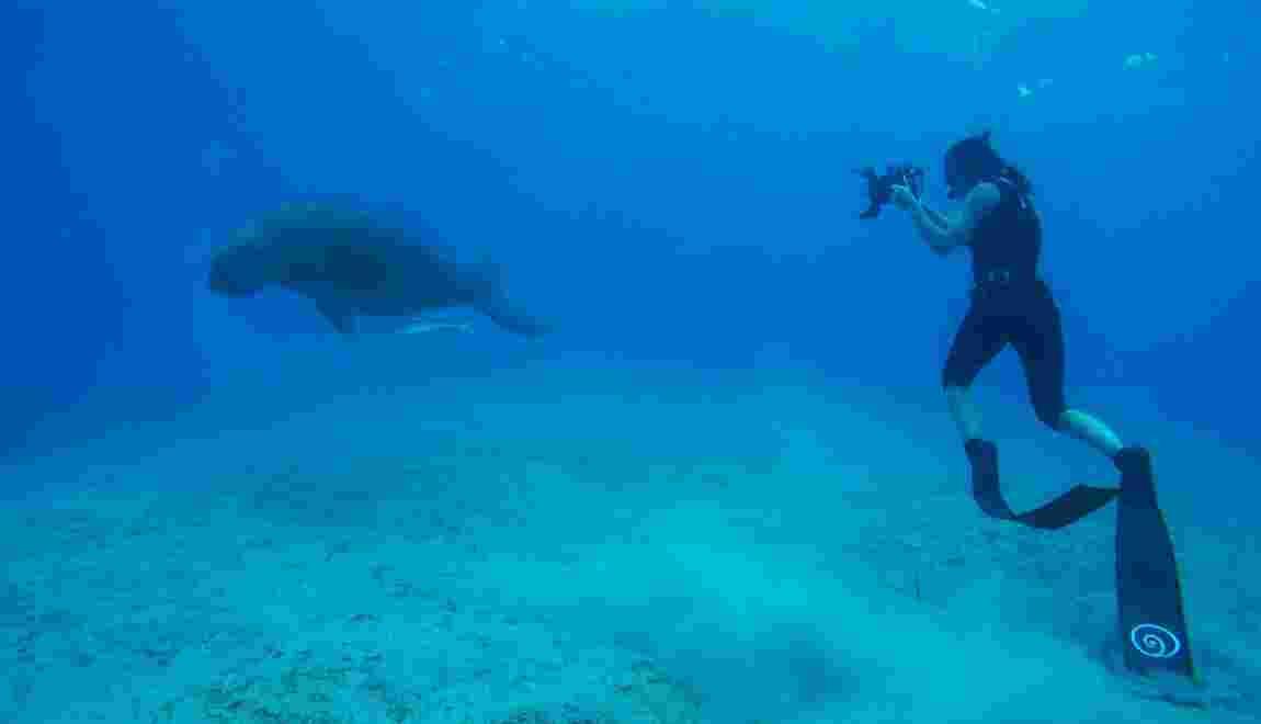 Aurore Asso, l'apnéiste qui plonge avec les espèces en danger