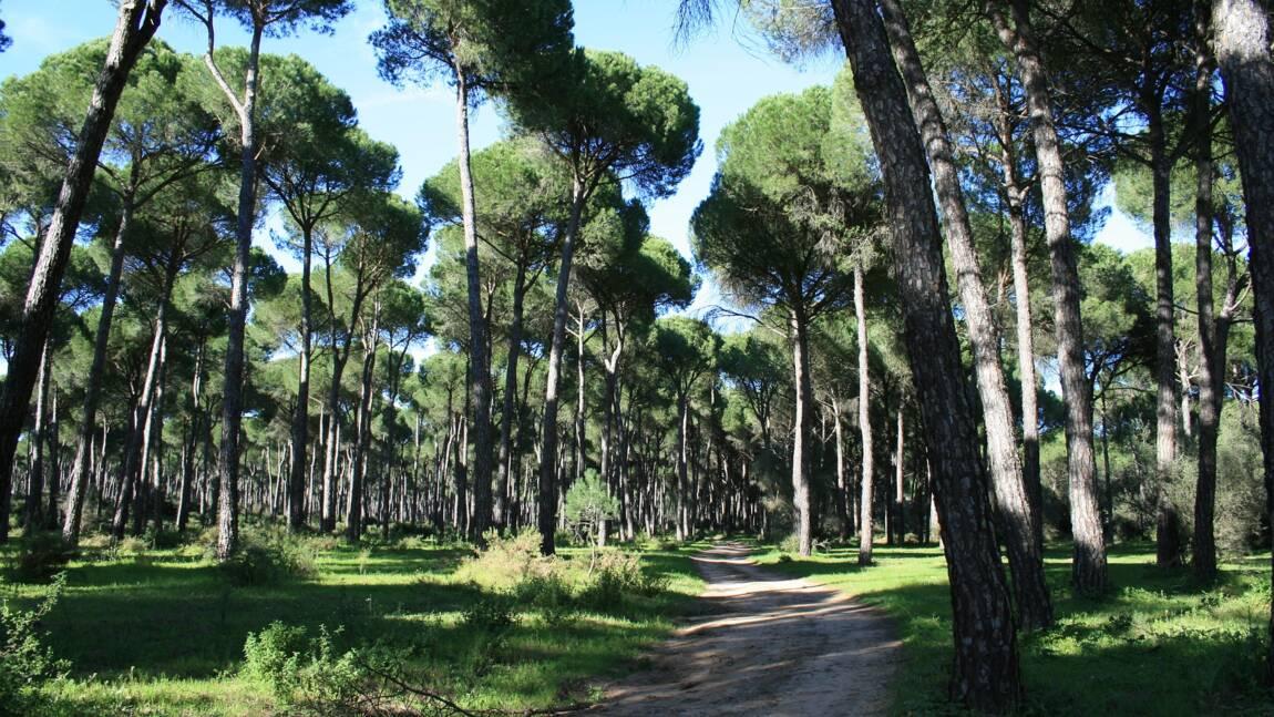 Ecosystème : qu'est-ce qu'un Biome ?