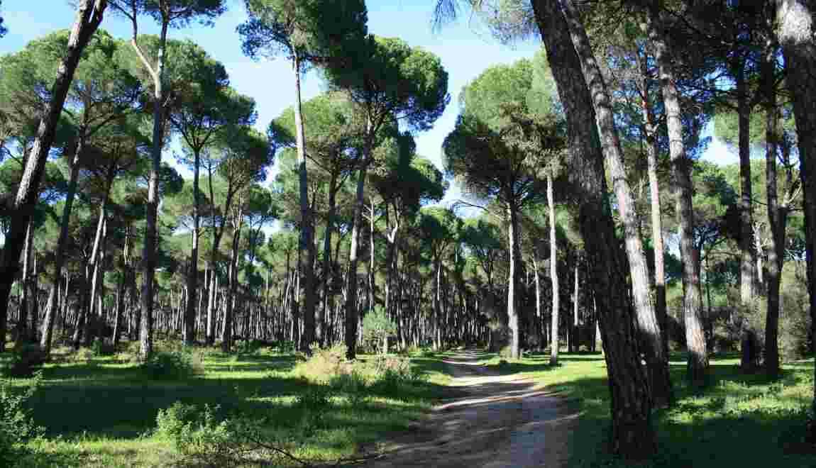 Ecosystème Quest Ce Quun Biome Geofr
