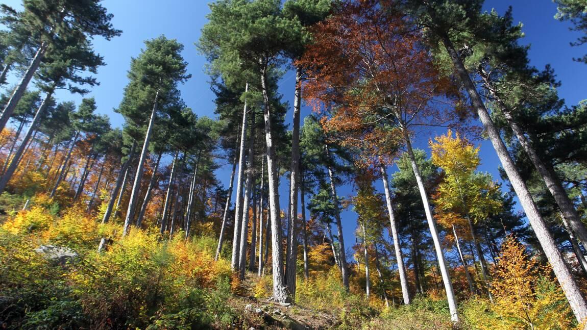 Un cinquième des forêts méditerranéennes de France menacées