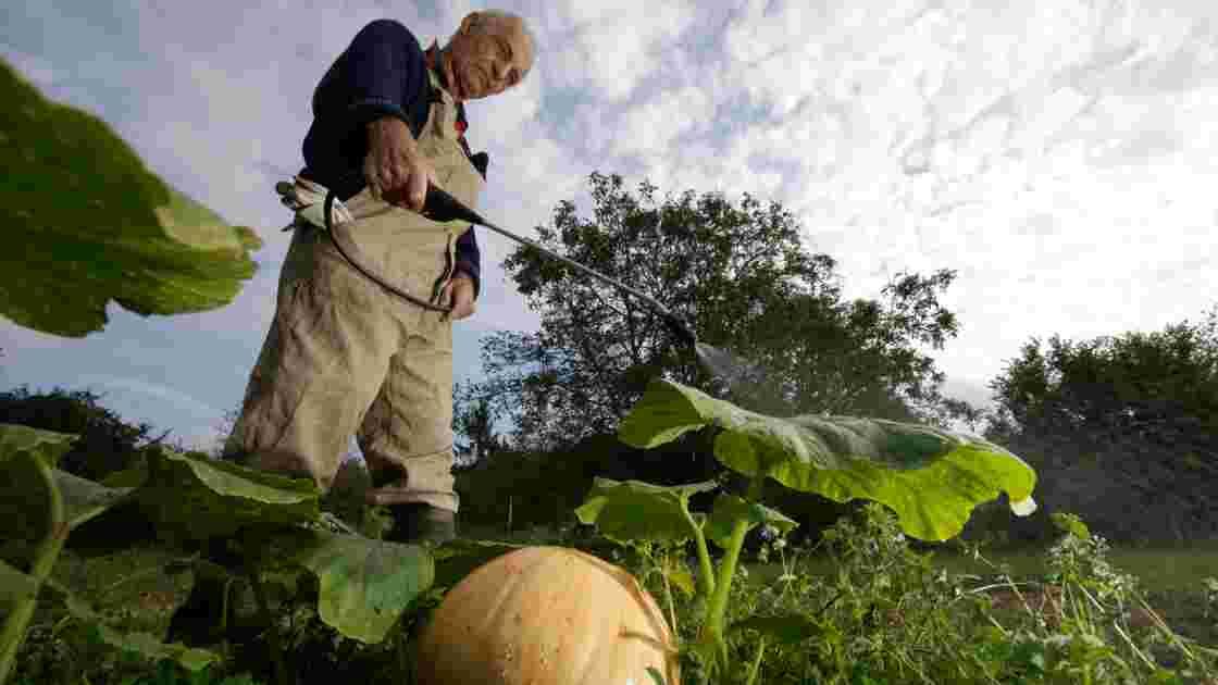Jardiniers du dimanche, dites adieu aux pesticides chimiques