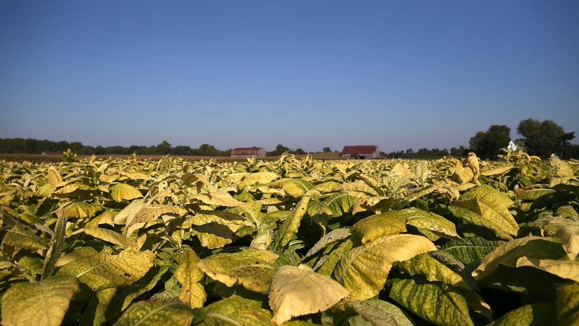 Dans un champ de l'Illinois, à la recherche d'OGM super-productifs