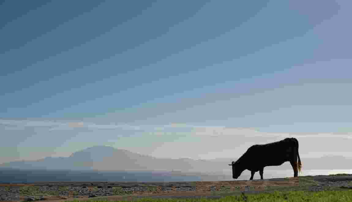 Renoncer à la viande peut sauver des millions de vies, selon le Forum Economique Mondial