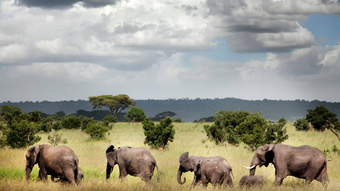 Des caméras équipées de l'intelligence artificielle pour protéger les éléphants de Tanzanie