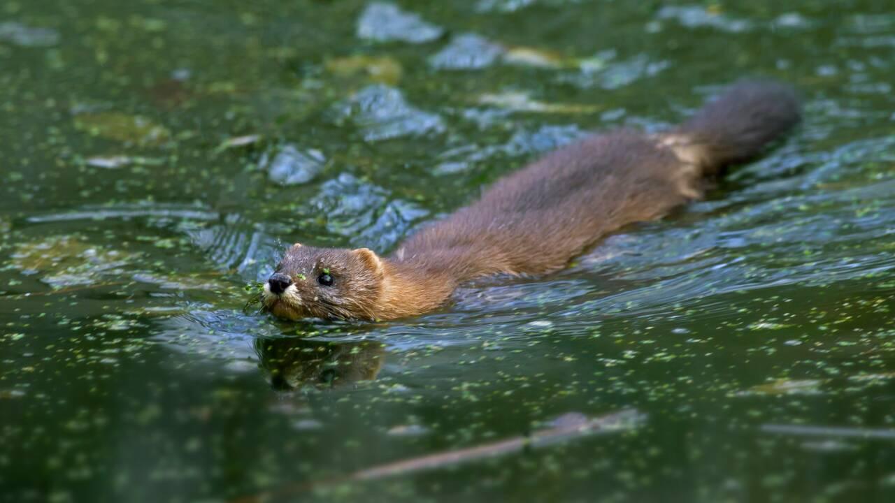 En France, la biodiversité continue de décliner selon un nouveau rapport