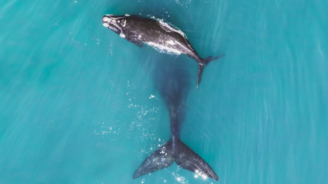 Les plus belles photos capturées à travers le monde depuis un drone en 2018
