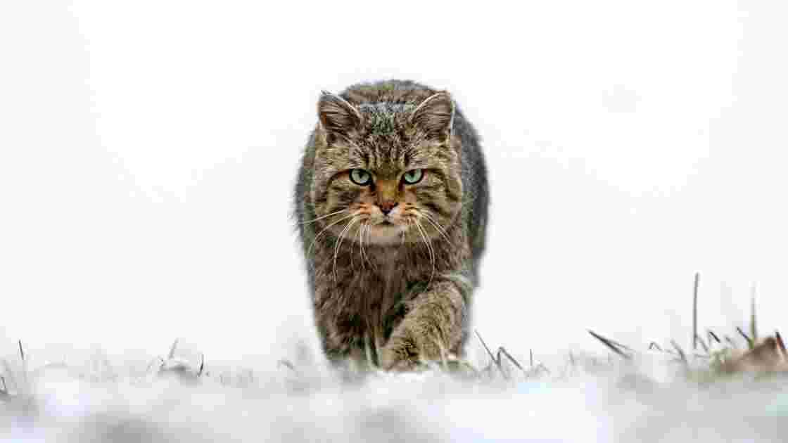 Photo animalière : les plus beaux clichés de 2018
