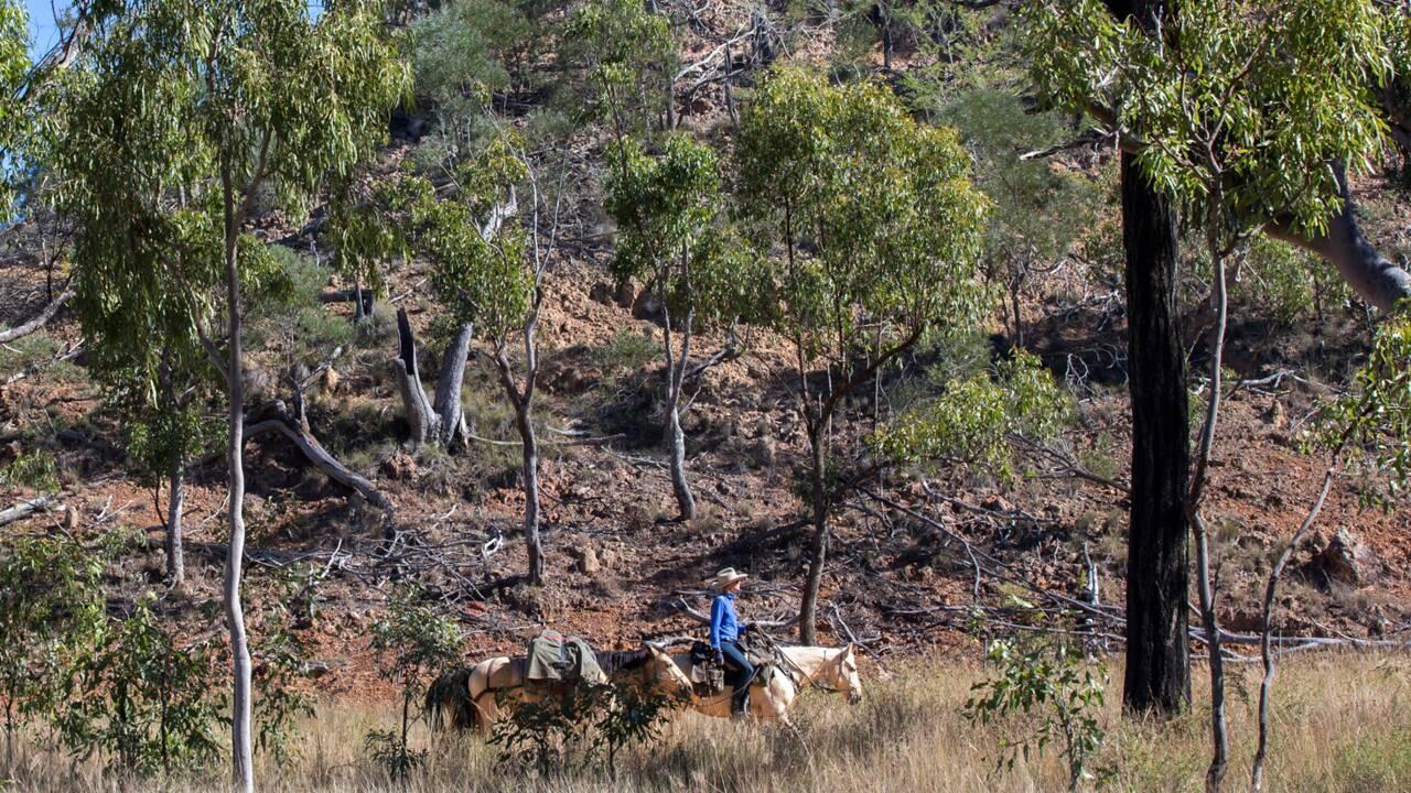 La traversée de l'Australie à cheval, l'expérience de la Bretonne Aliénor Le Gouvello
