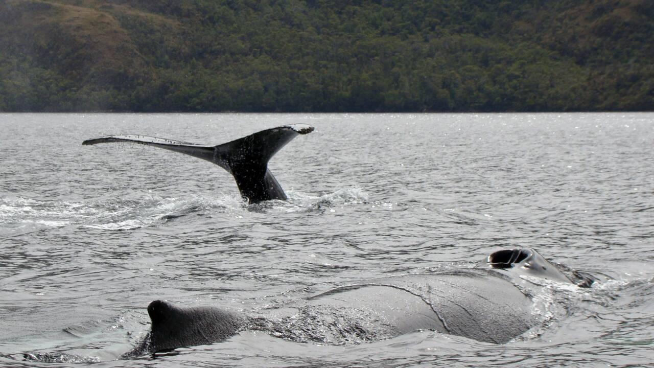 Les eaux de la Patagonie, laboratoire naturel pour étudier le changement climatique