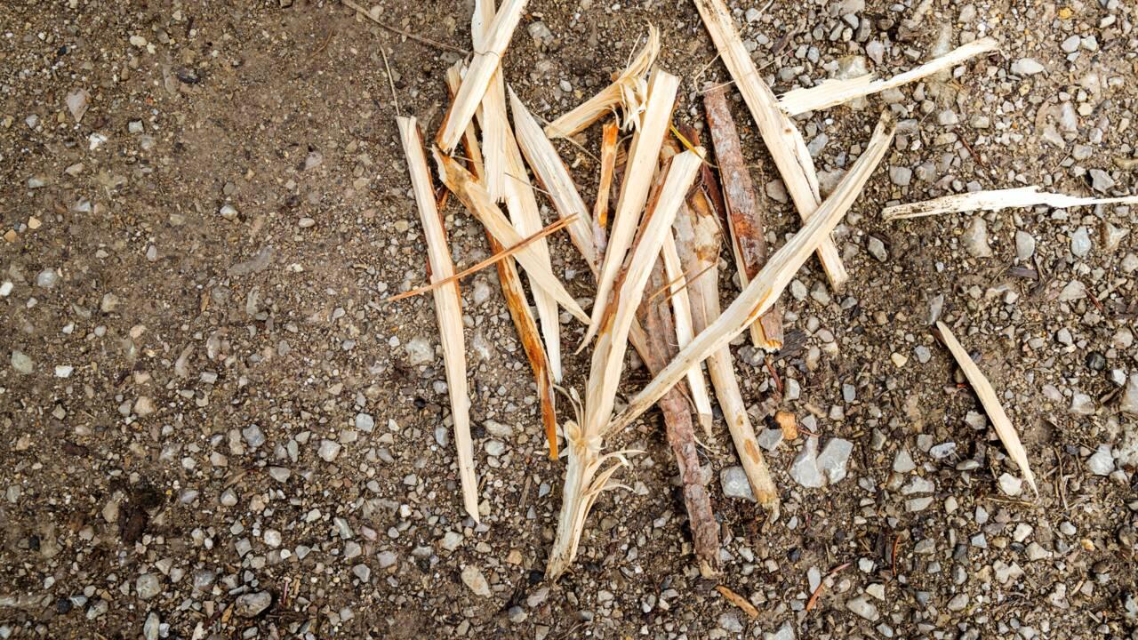 Survivre dans la nature : comment faire un feu… sans papier journal