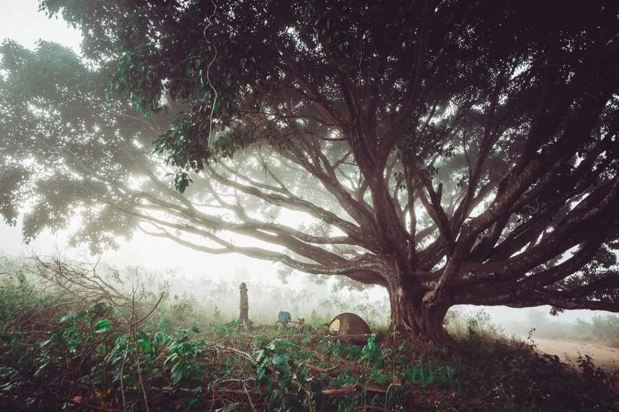 Nuit cosmique sous un arbre