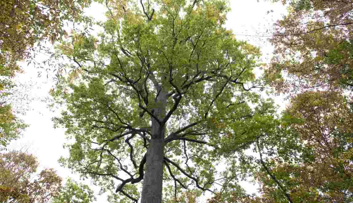 Départ du directeur de l'ONF, l'avenir des forêts publiques en question