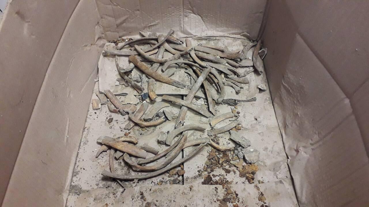 Verdun : le mystère des ossements d'un soldat de la Première Guerre mondiale