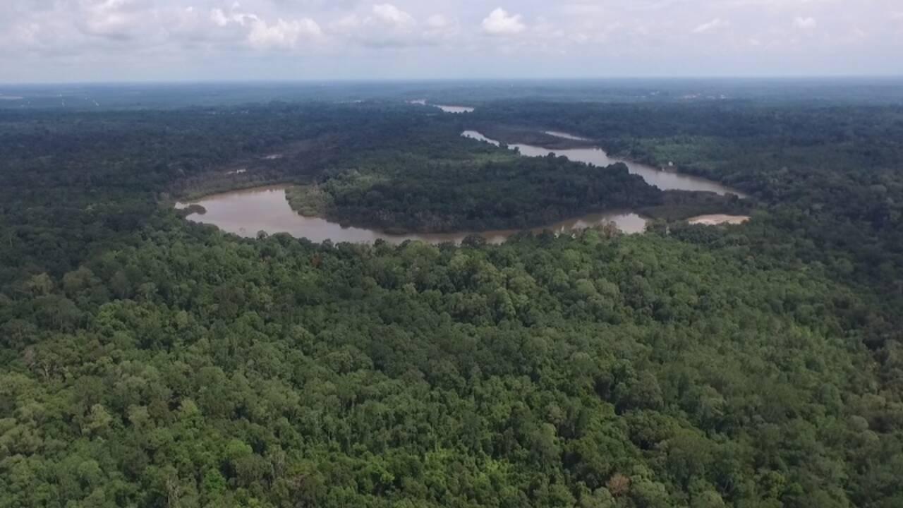 A Bornéo, une forêt peuplée d'orangs-outans bientôt sauvée grâce à la création d'une réserve ?